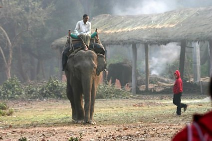 Elephant ride at Dudhwa national Park