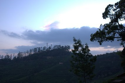 Morning Light in Munnar