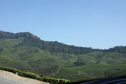 A view of tea gardens from the highway to Munnar