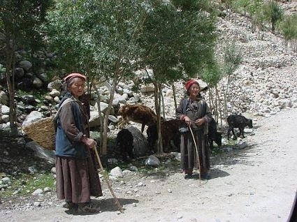 Ladakhi women out with their goats