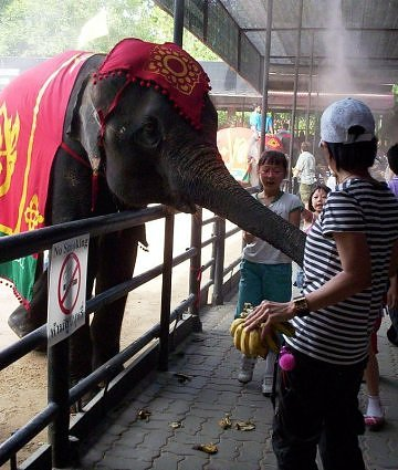 How about an elephant as your masseur