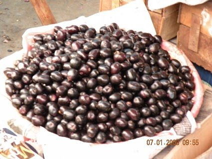 Jamun fruit, purple fruit