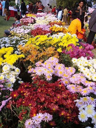Chrysanthemum and Coleus Show