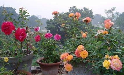 Rooftop Garden In December North India Photo Journal