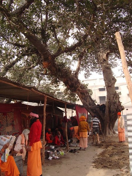Sadhus making tea in Joona akhara camp, Mahakumbh, Haridwar