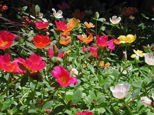 Relax With Art Calendar : North india garden calendar for april