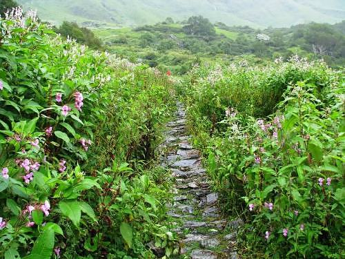 Flowers at Valley of Flowers, Garhwal Himalaya