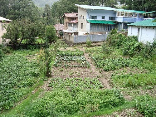 A monsoon kitchen garden on Aryapatta hillside, Nainital