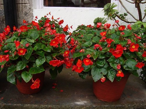 Flower Gardens of Nainital in July Kumaon Himalaya Photo Journal