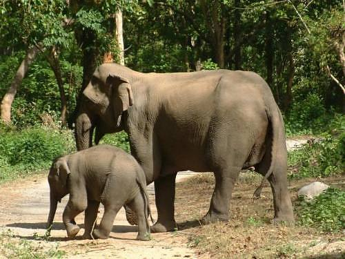 Mother and Baby Elephant at Jim Corbett National Park, India