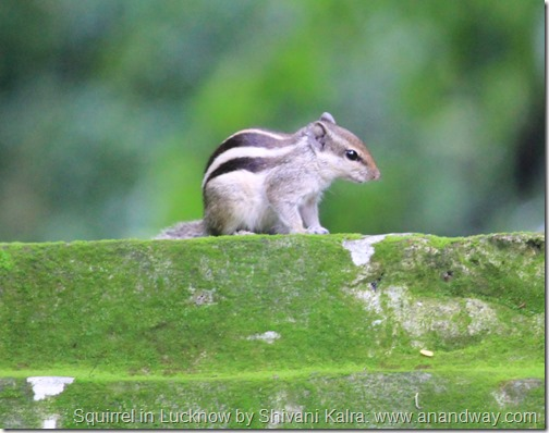 squirrel in lucknow by shivani kalra