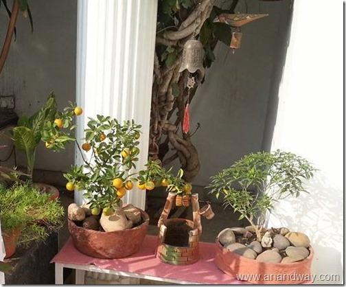 garden aretefacts india prof rs bisht prof vimala bisht (1)