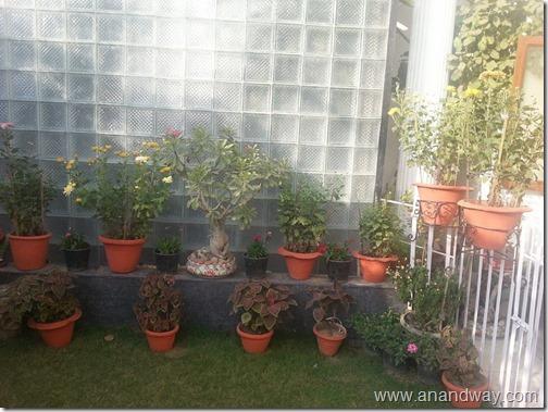 garden aretefacts india prof rs bisht prof vimala bisht (4)