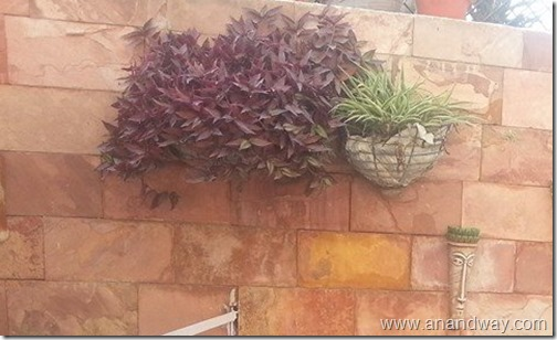 garden aretefacts india prof rs bisht prof vimala bisht (5)