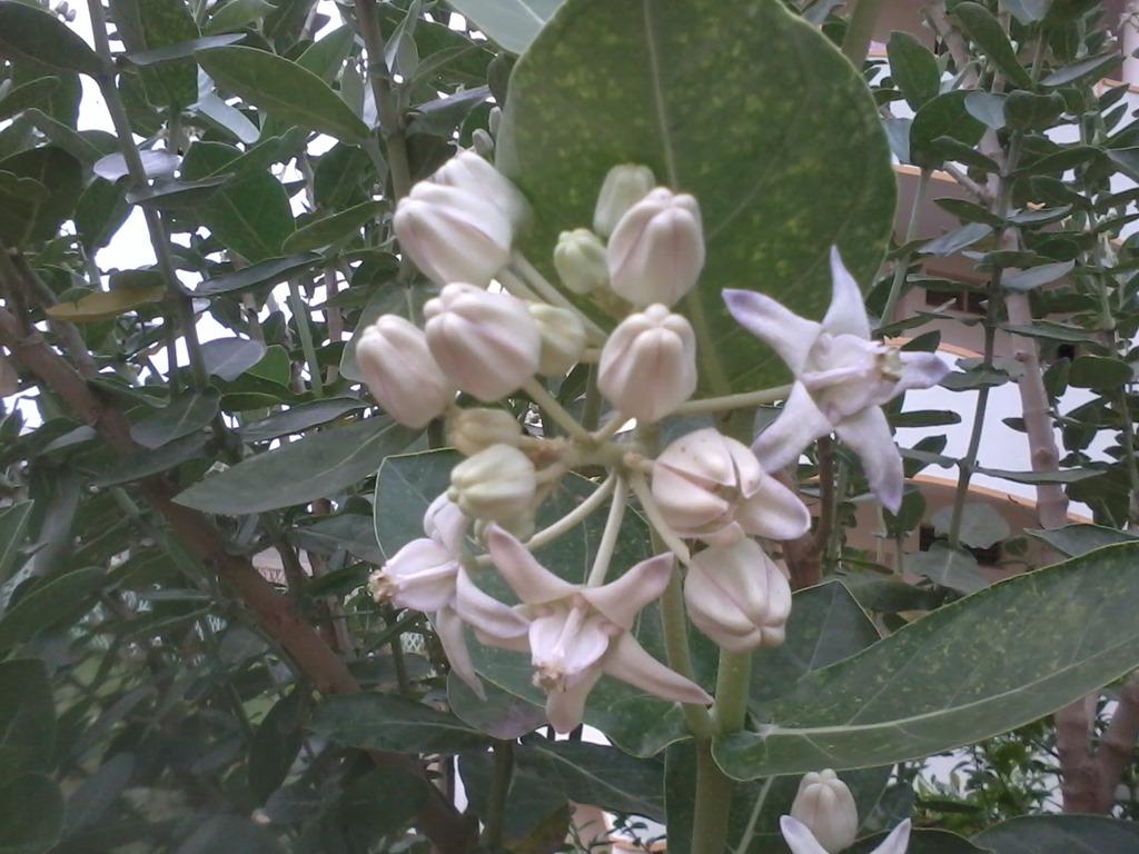 Easy Care Flowering Bushes