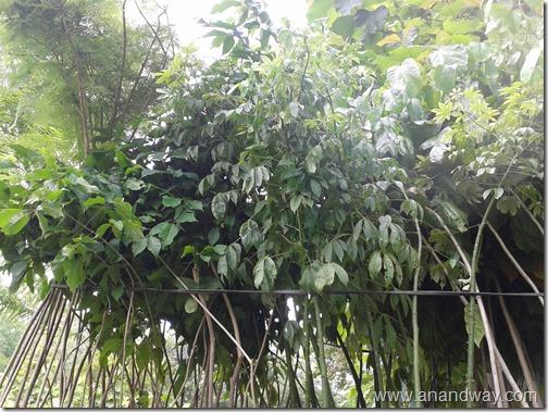 forest dept nursery indiranagar sec 18, lucknow (13)
