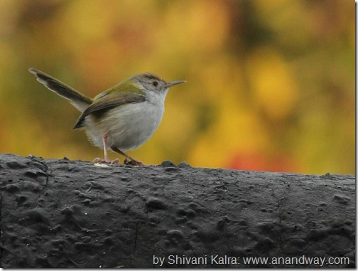 tit in lucknow by shivani kalra[6]