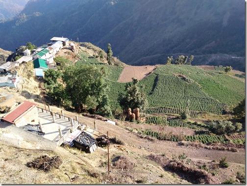 potato fields near dhanaulti